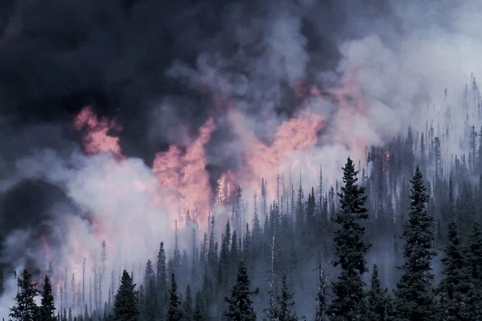 """Auf der """"Road To Chaos"""" sind auch brennende Wälder zu sehen."""