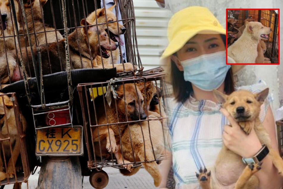 Zehn Welpen aus Mini-Käfig gerettet: Der Kampf gegen das grausame Hundefleischfestival!