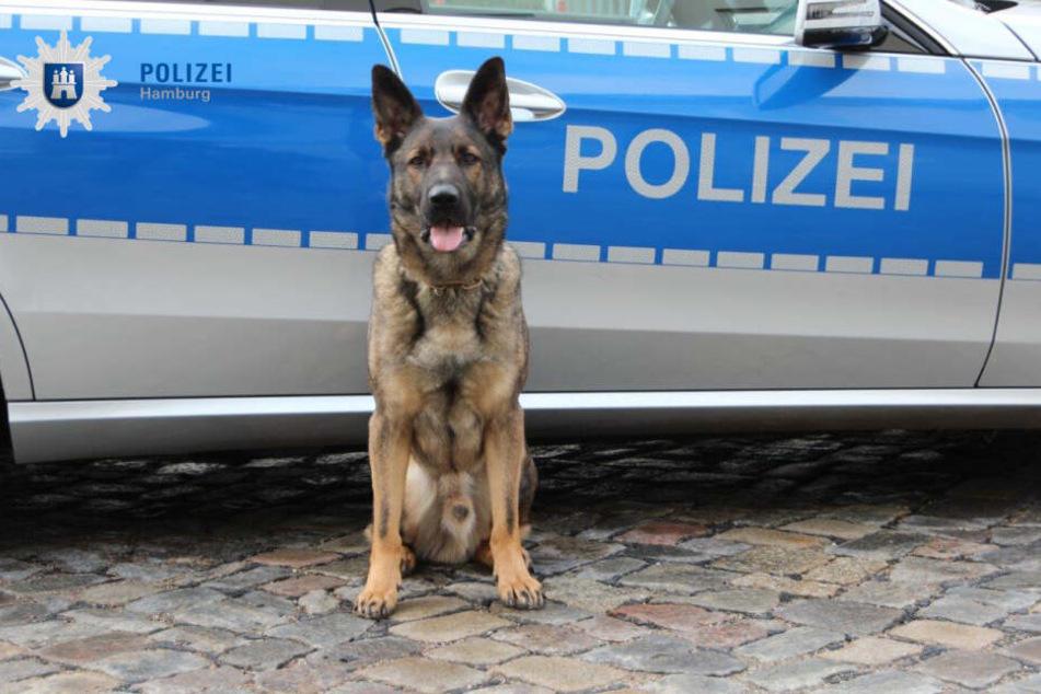 """Polizeidiensthund """"Balu"""" wurde beim Einsatz in der Hafenstraße fündig."""