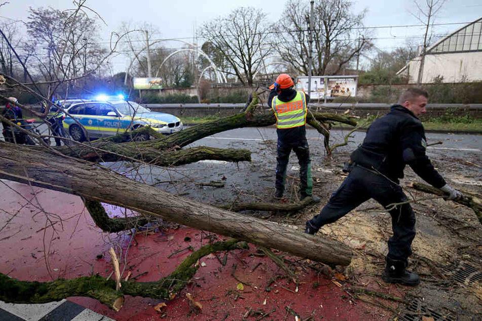 In NRW beseitigen Polizisten einen umgestürzten Baum.