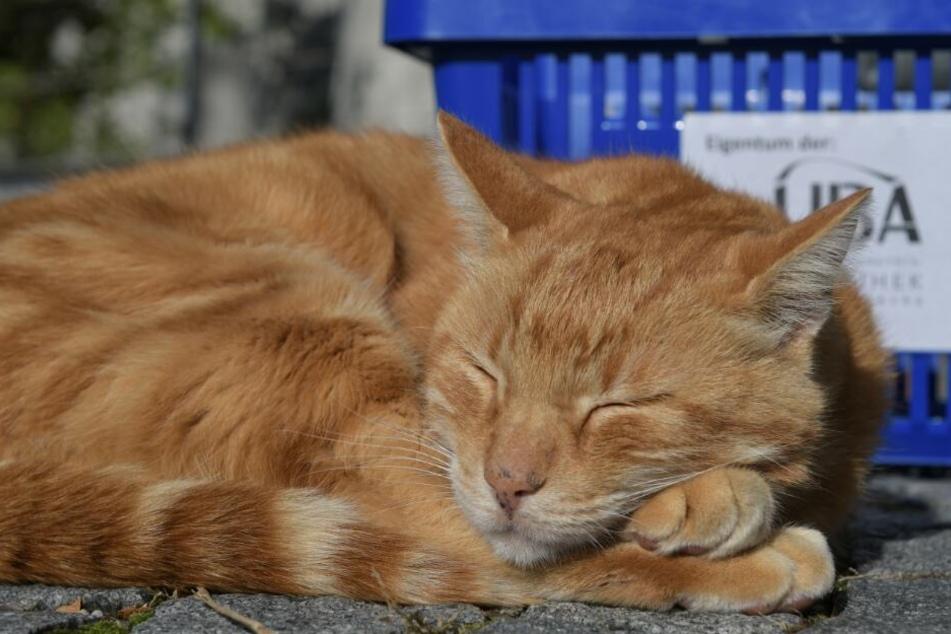 Auch für Katzen fordern die Tierschützer eine Registrierungspflicht.