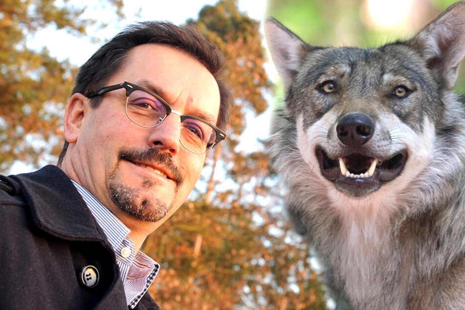 Hündin getötet: Bürgermeister fordert Abschuss des Killer-Wolfs