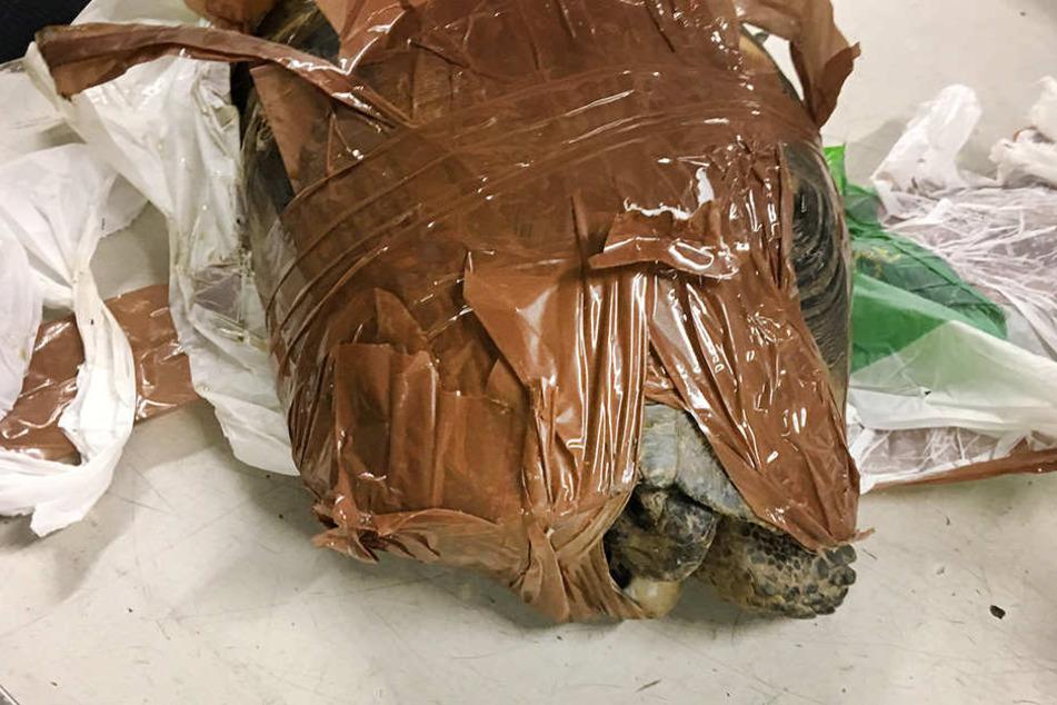 Am Münchener Flughafen rettete der Zoll zwei Schildkröten.