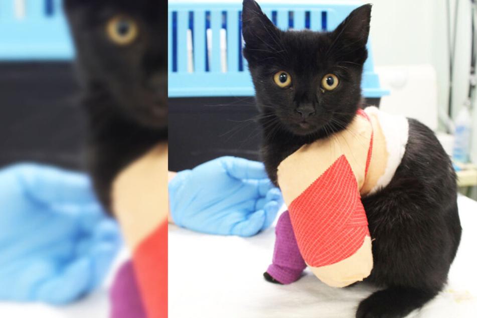 Katze sucht Schutz vor Kälte, kurz danach muss ihr eine Pfote amputiert werden