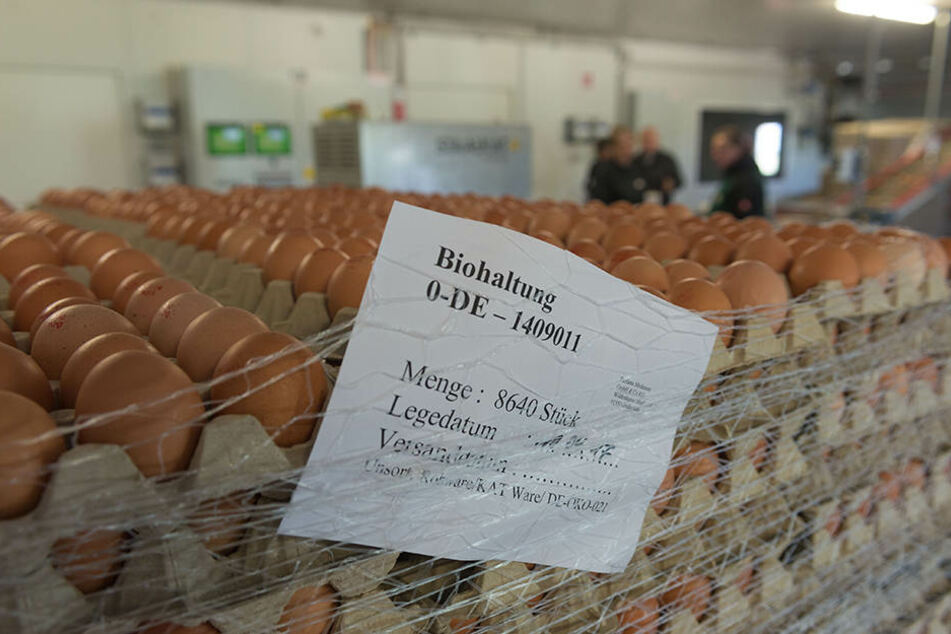 Noch im Stall werden die Eier vorsortiert, gestempelt und auf Paletten gepackt. Der Preis für sechs Bio-Eier liegt im Einzelhandel um 3,20 Euro.