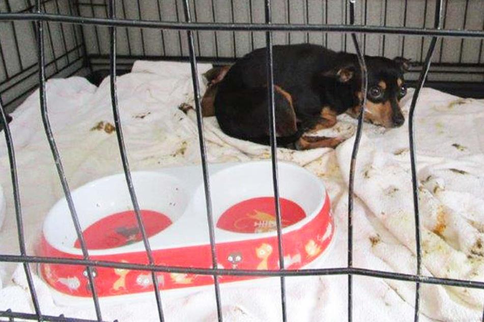 Völlig apathisch und verängstigt liegt eine Hunde-Mama mit ihrem Welpen in einem Käfig.
