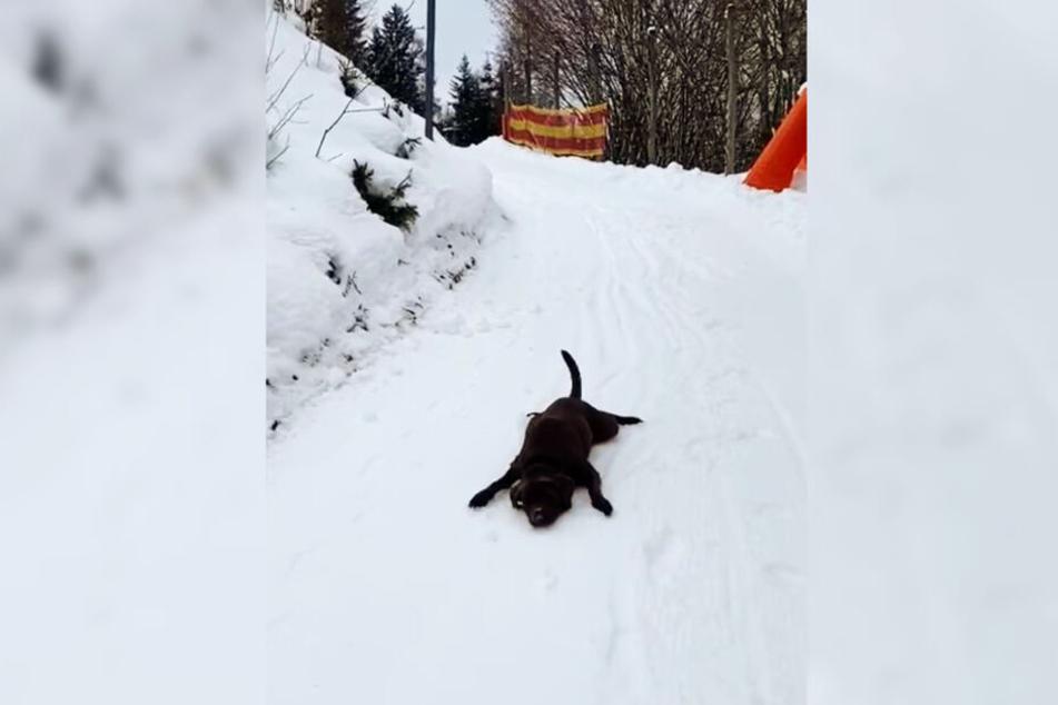 Hund Ira rutscht den kleinen Berg auf einer Hotelanlage runter.
