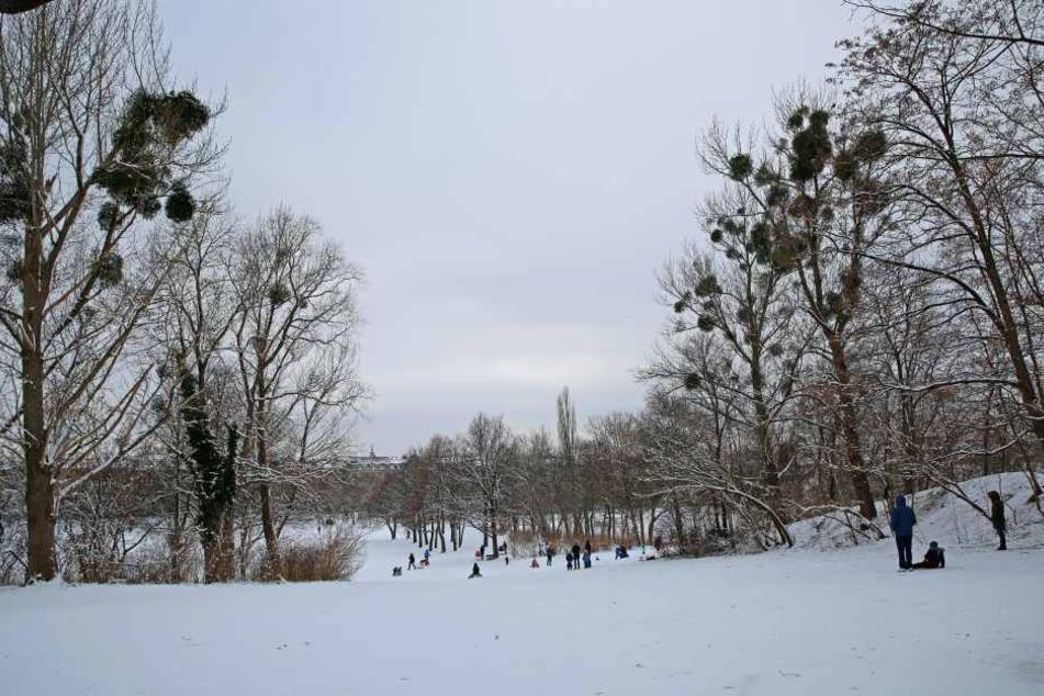 Im Alaunpark müssen 29 Bäume gefällt werden.