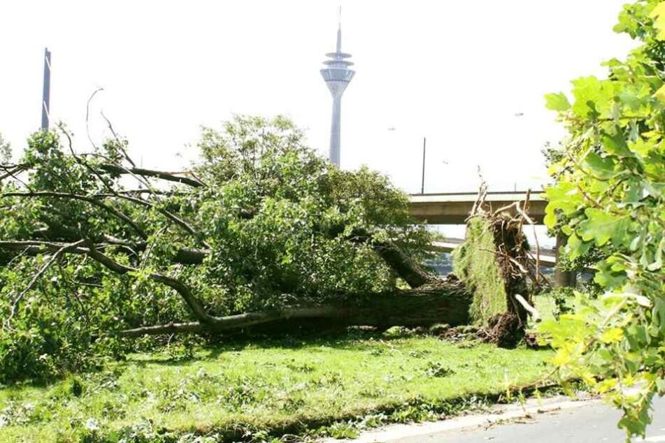 Erst nach knapp zwei Wochen waren die größten Schäden durch das Unwetter beseitigt worden.