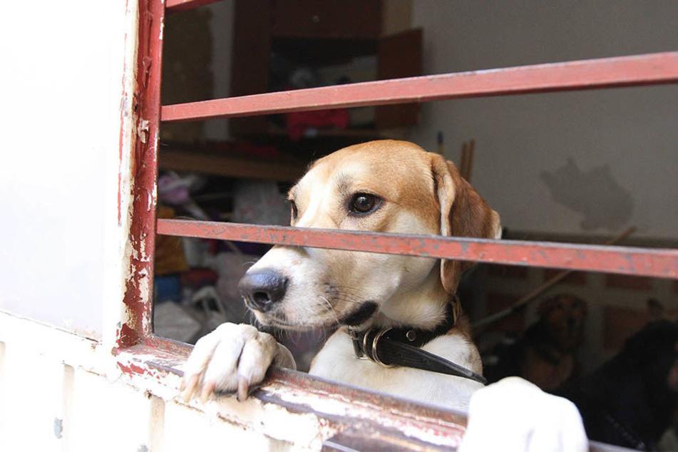 Nach dem Erdbeben in Mexiko wurde eine Unterkunft für Tiere eingerichtet, die ihre Besitzer in Folge des Bebens verloren haben.