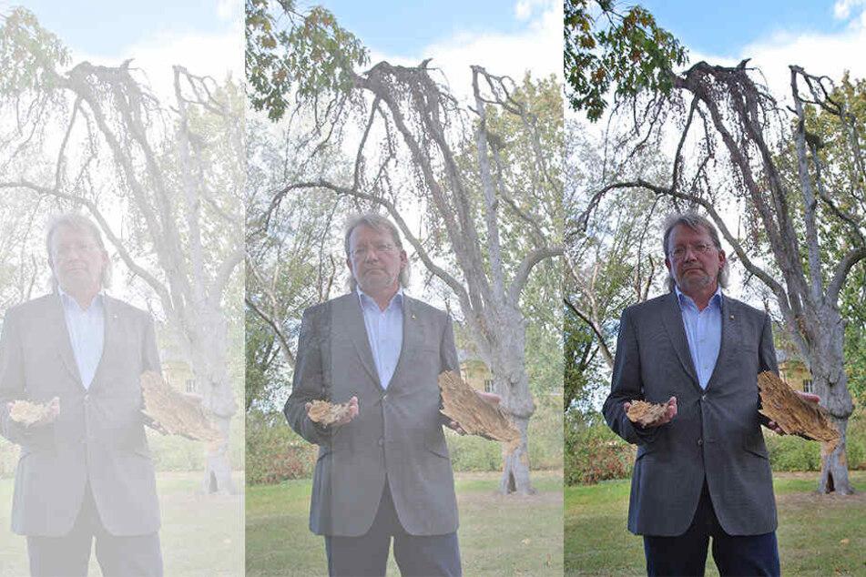 So leiden Sachsens Schlösser-Gärten unter dem Klimawandel