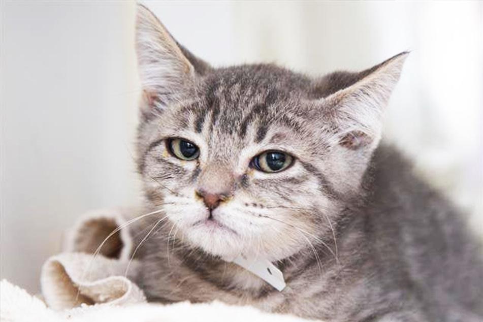 Diese Katze wollte lange niemand haben: Dank Reddit hat sie nun ein Zuhause!