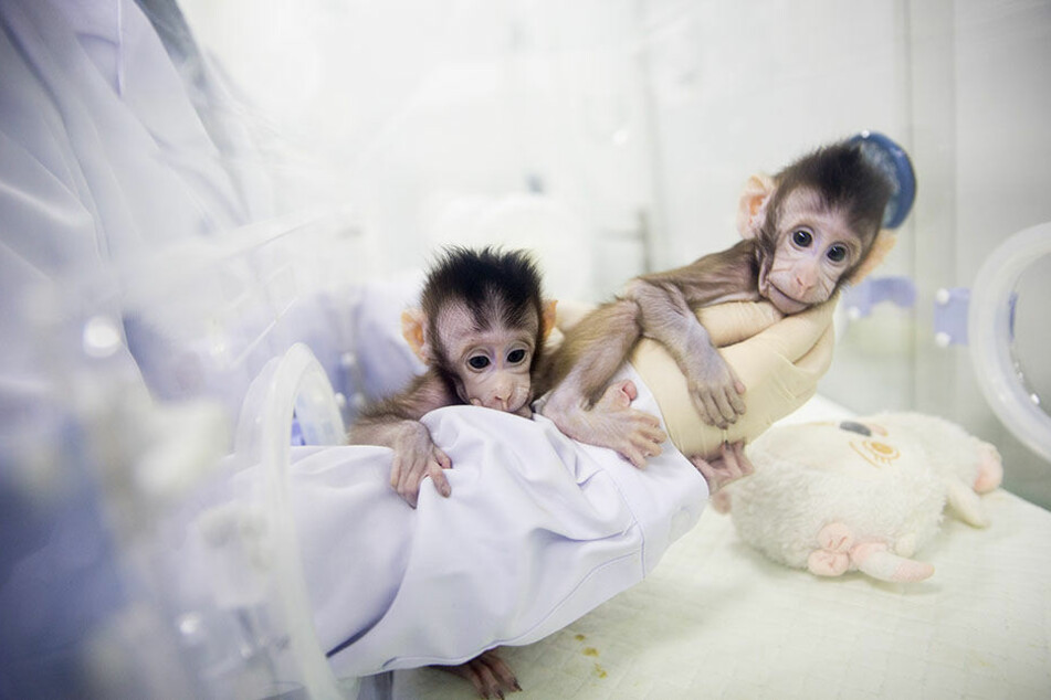 Zhong Zhong und Hua Hua besitzen identische Gene.
