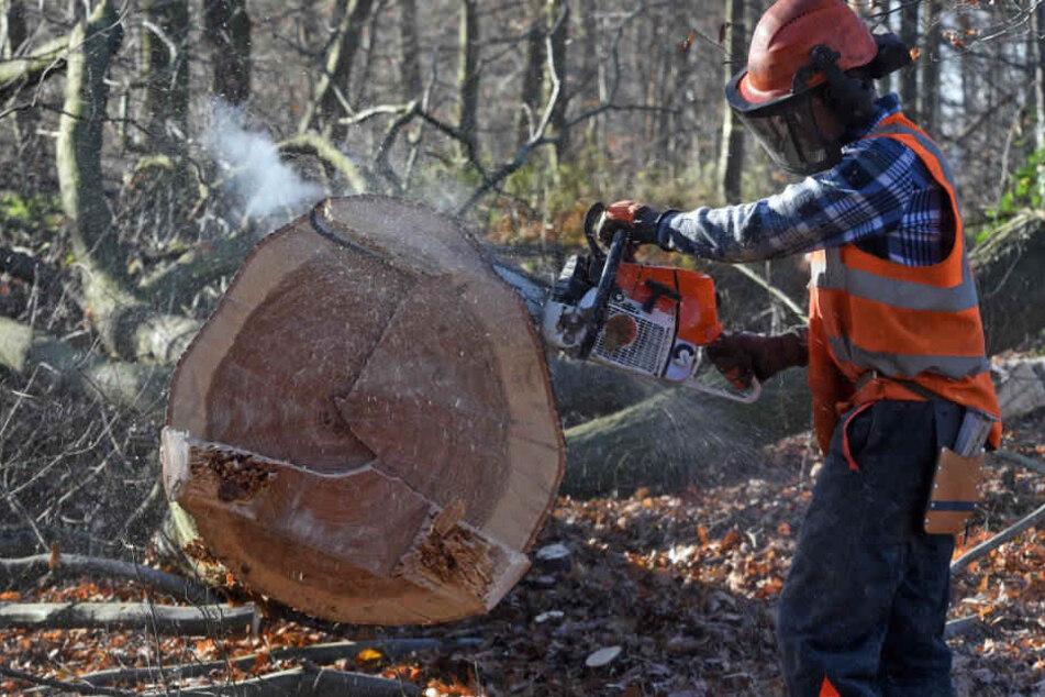 Nach Einschätzung von RWE kann die Entscheidung über weitere Rodungs-Arbeiten bis Ende 2020 dauern.
