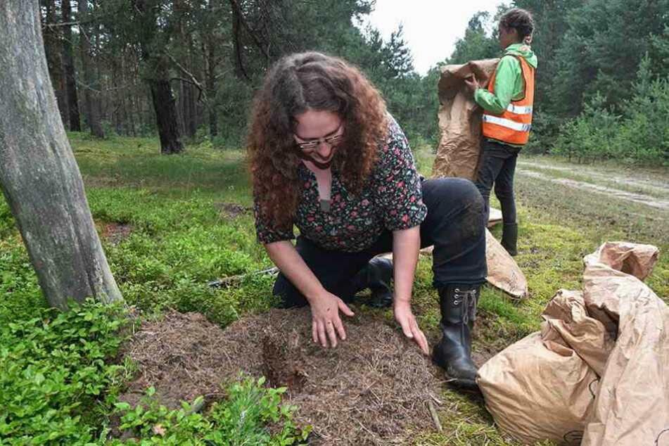 Handarbeit: Christina Gräz (42) kümmert sich mit bloßen Händen um den Ameisenhaufen.