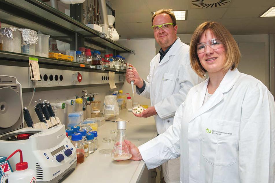 Die beiden Wissenschaftler präsentieren die Tabakpflanze in der Petrischale.