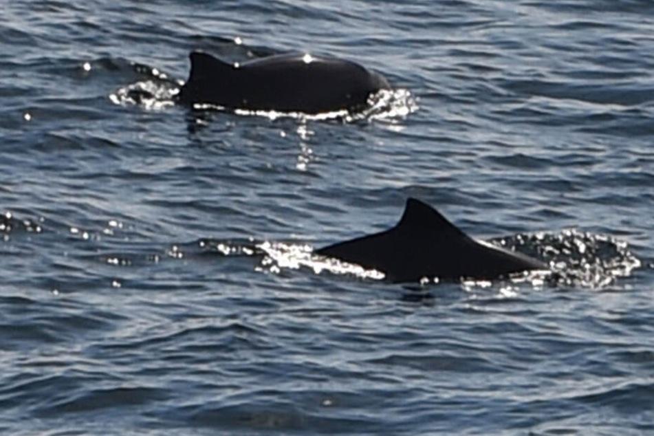 Whalewatching in Deutschland: Hier könnt Ihr im Sommer Wale beobachten