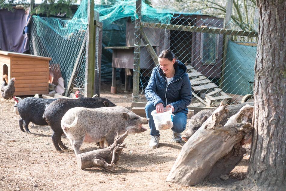 Die Minischweine Knacki, Bocki und Pfötchen genießen ihr Gnadenbrot bei Simone Staatz (49).