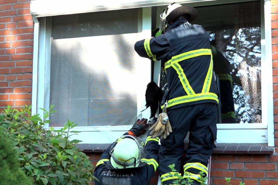 Katze steckt in Fenster fest: Bei der ihrer Rettung machen Einsatzkräfte erschreckenden Fund