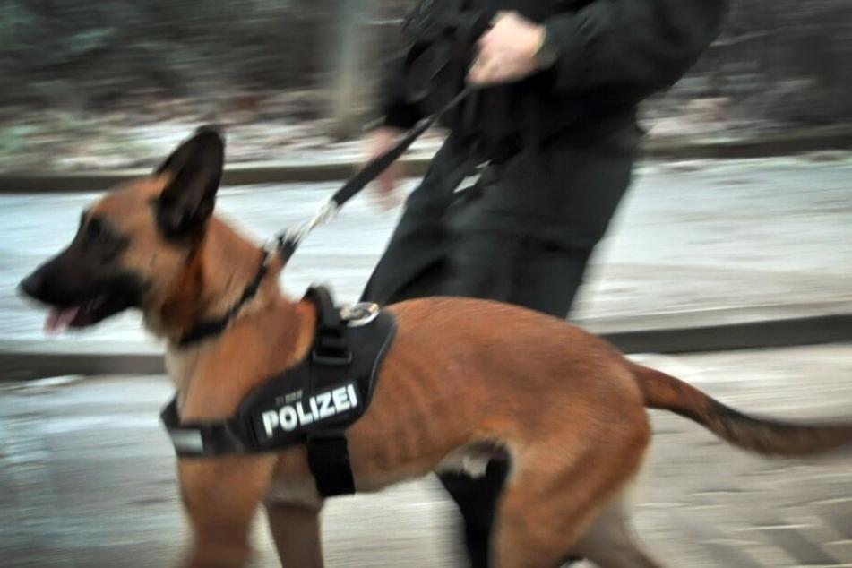 Mit Hunden und Hubschraubern suchte die Polizei nach dem Täter. (Symbolbild)