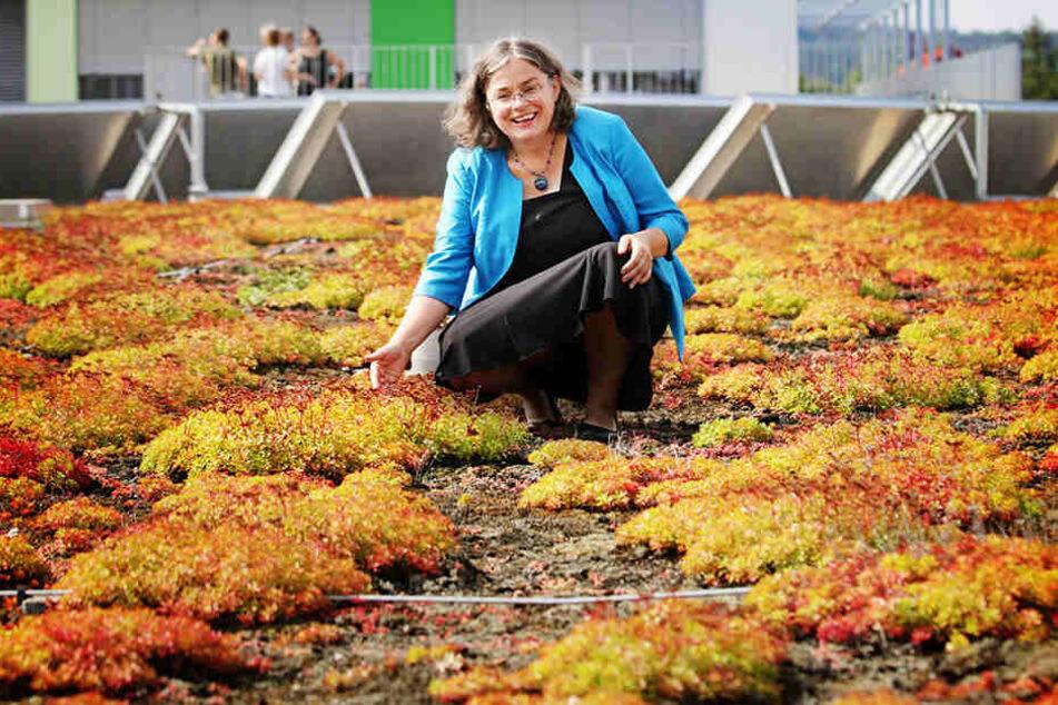 So sieht eine gelungene Gründachgestaltung aus: Eva Jähnigen (53, Grüne) auf dem Gymnasium Bühlau.