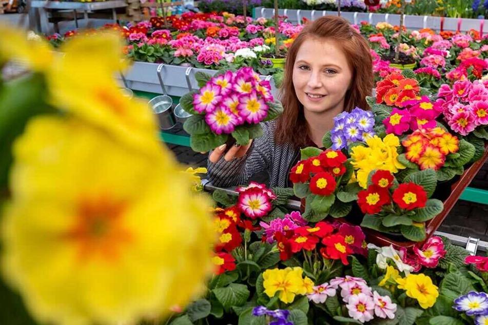 Chemnitz: Hier gibt's den Frühling für zuhause!