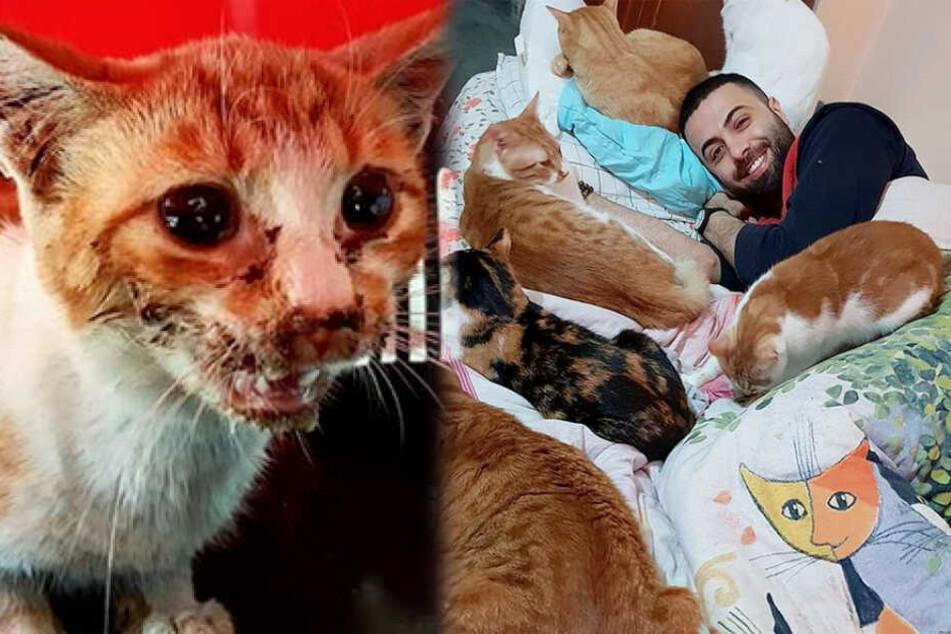 Er rettet behinderte Katzen und schenkt ihnen ein Zuhause