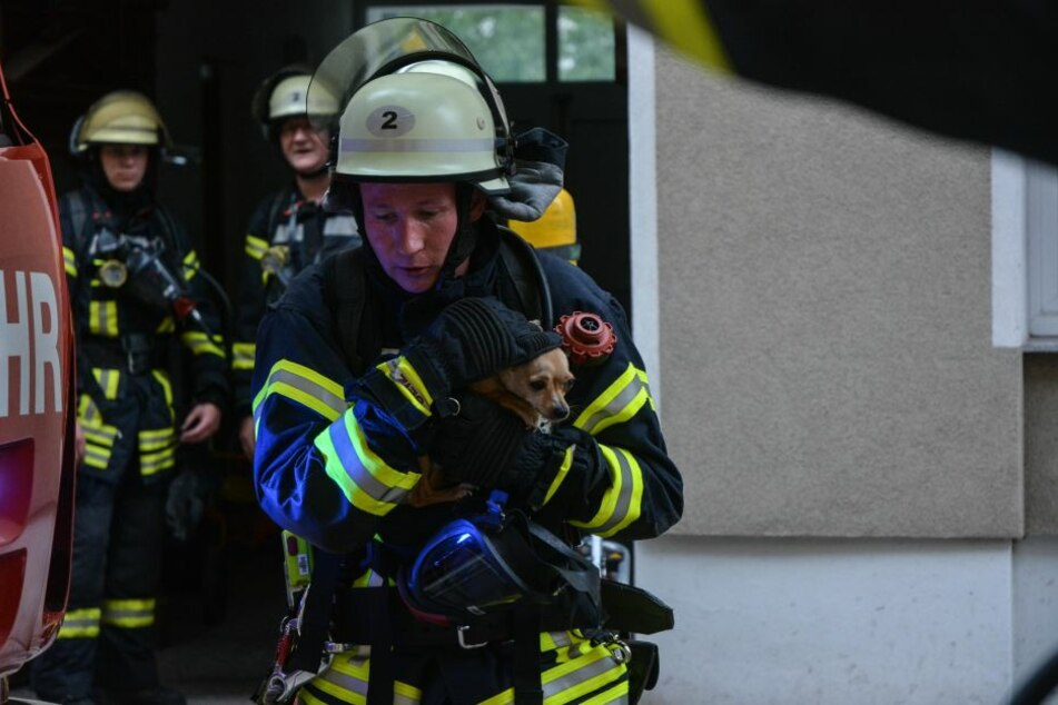 """Hund """"Snoopy"""" konnte aus dem Haus gerettet werden. Für eine Katze in der Brandwohnung kam jedoch jede Hilfe zu spät."""
