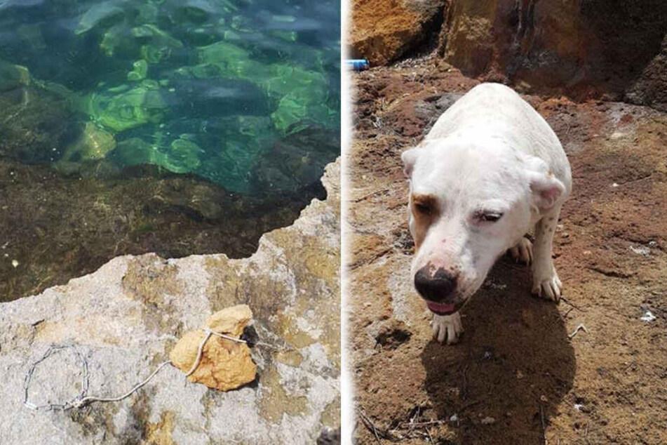 Dieser Hund musste die Grausamkeit seines Besitzers am eigenen Leib spüren.
