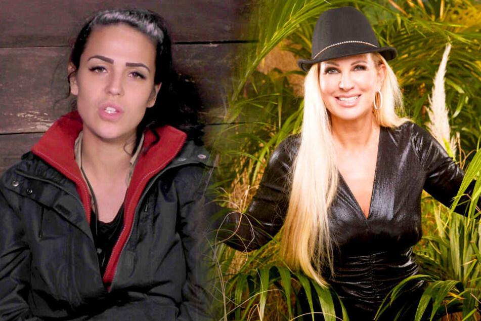 Dschungelcamp: Dschungelcamp: Elena will Bombe platzen lassen! Hat Claudia den Wendler betrogen?
