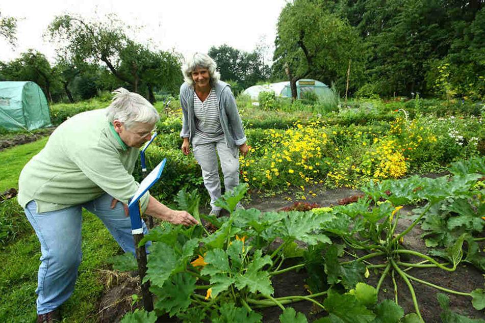 Elke Siemens (l.) und Gabriele Ankewitz inspizieren die Zucchini im großen Garten.