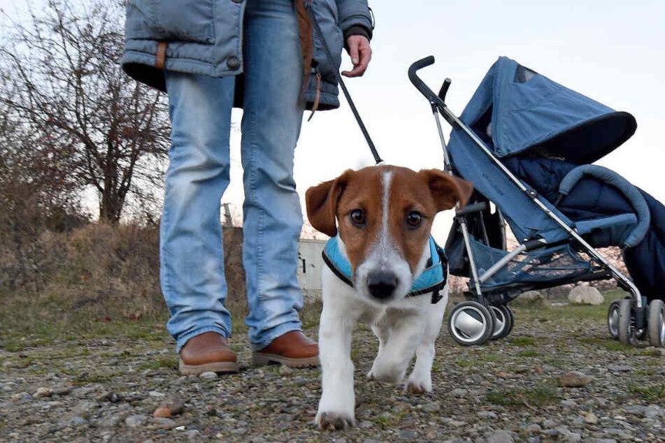 Viele Hundehalter ärgern sich über die Hundesteuer, die als jährliche Abgabe für ihren Hund fällig wird.