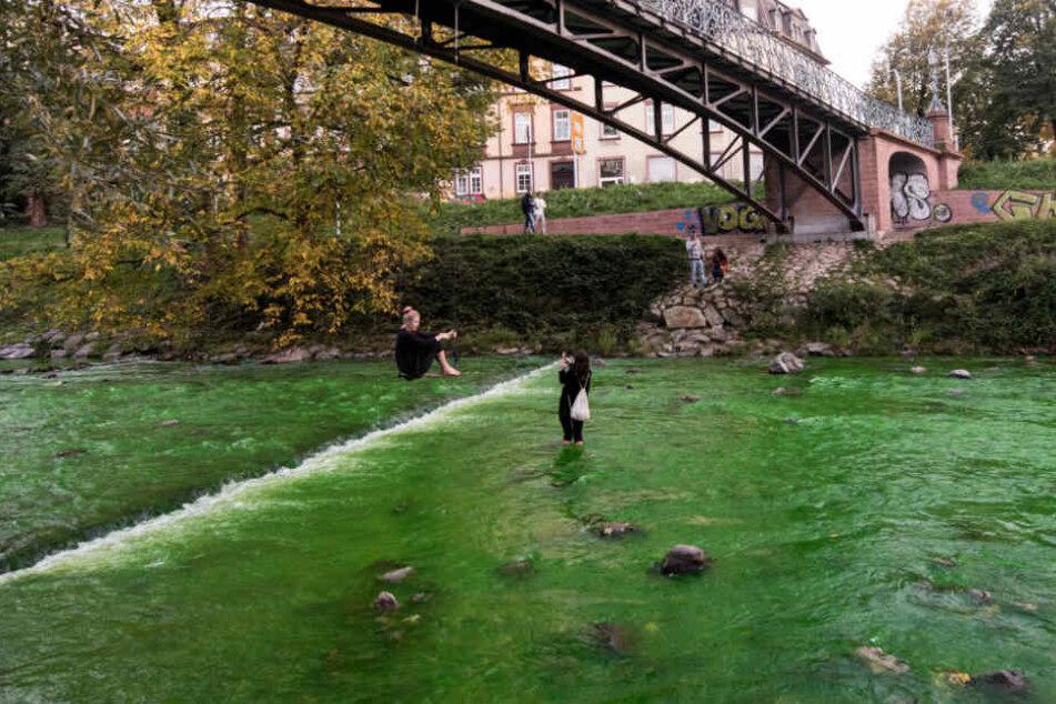 Attraktion in Freiburg: Plötzlich war die Dreisam grün.