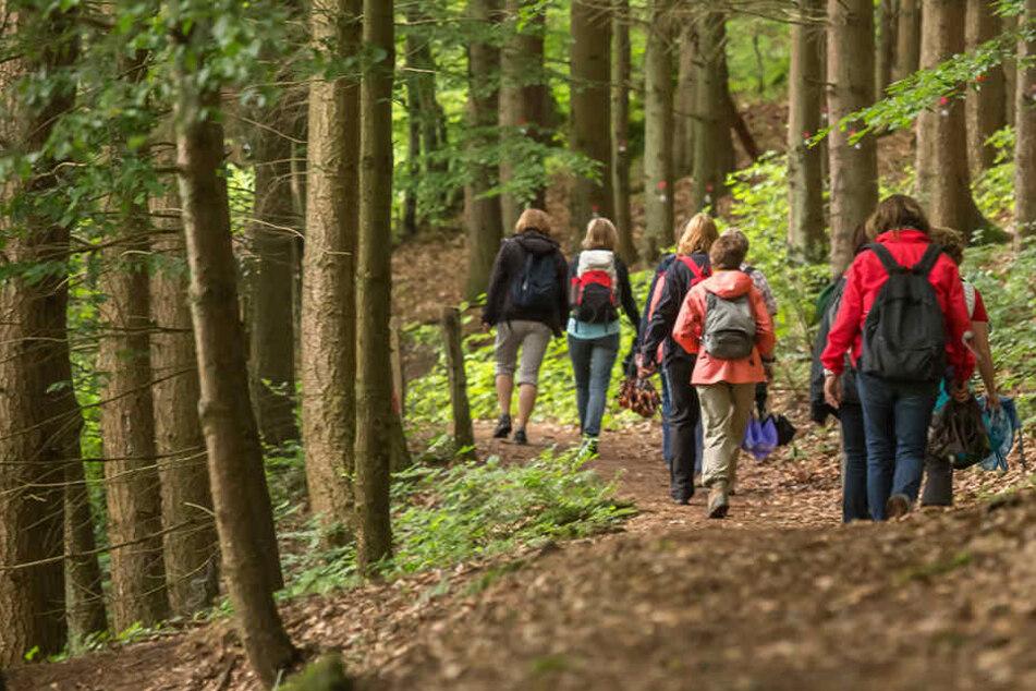 Mit dem Bus zum Wandern: VMS setzt Touristen im Wald aus