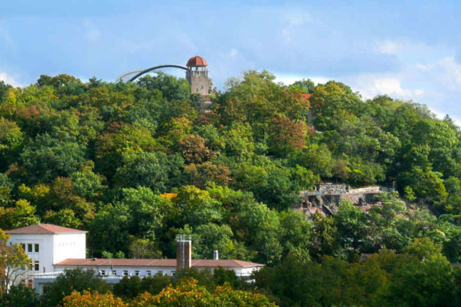 Im Bergzoo in Halle(Saale) sollen acht tote Vögel in einem Kühlhaus versteckt worden sein.