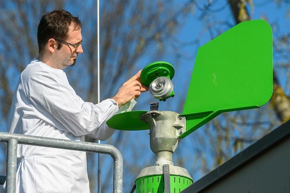 Markus Naake (35) entnimmt in der Landesuntersuchungsanstalt die Probe aus der Pollenfalle.