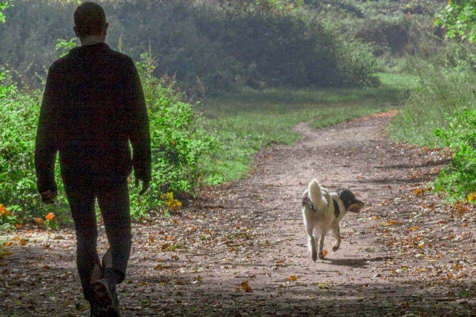Noch ist unklar, ob es wirklich ein Giftköder gewesen ist, der das Leben des Hundes forderte. (Symbolbild)