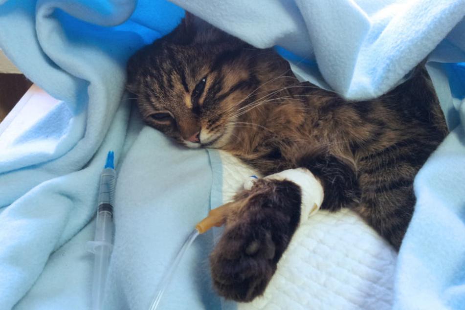Katze versteckt sich in Auto: Dann wird es lebensgefährlich