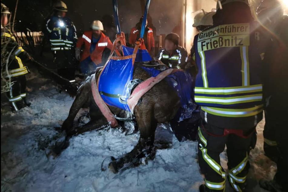 Die Feuerwehr befreite das Pferd mit einem Hebesatz aus dem Tümpel.