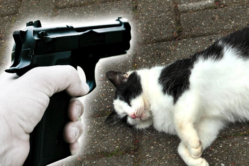 Katze im Erzgebirge mit Luftdruckpistole beschossen: Not-OP!