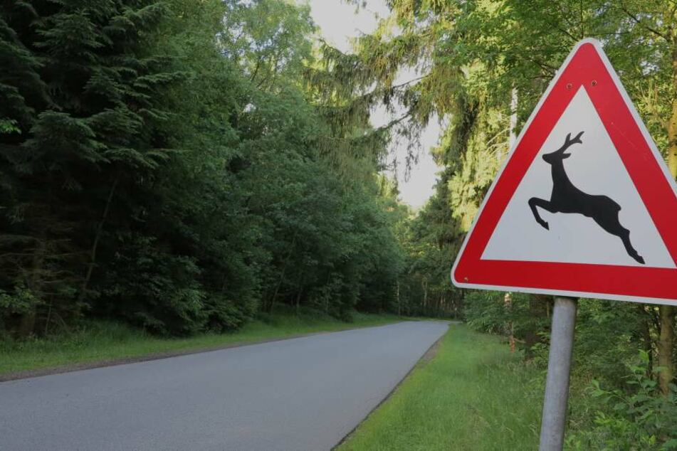 Unterschätzte Gefahr: Unfall durch Wildwechsel