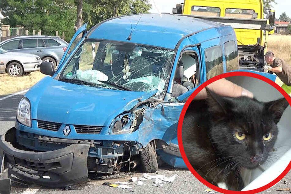 Schlechtes Omen? Schwarze Katze verursacht Unfall, zwei Personen schwer verletzt
