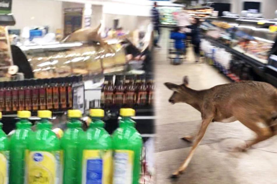"""Junges Reh geht in Supermarkt """"einkaufen"""" und verletzt sich dabei selbst"""