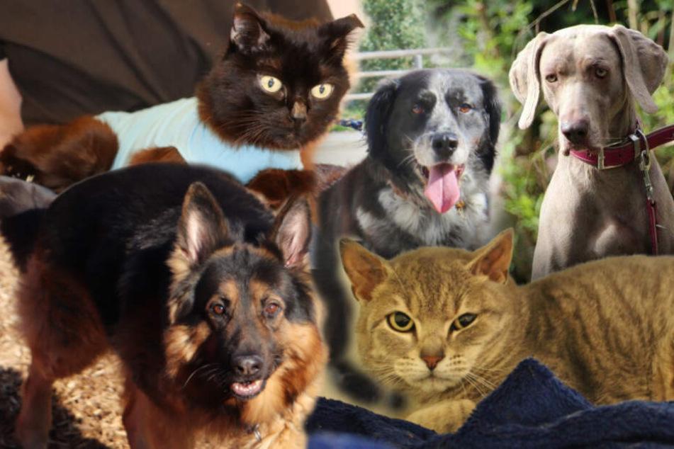 5 Hunde und Katzen: Diese besonderen Tiere suchen endlich ein Zuhause