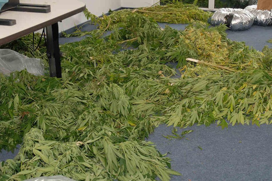 Mehrere Pflanzen entdeckten die Beamten auf dem Grundstück des Paares.