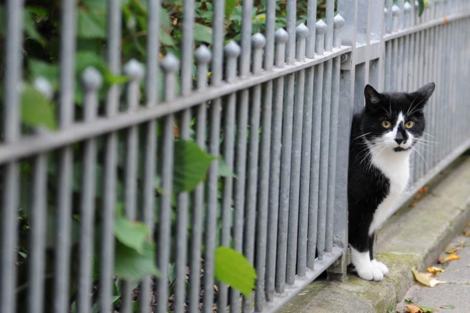 Abschuss oder Tierheim: Was geschieht mit streunenden Katzen?