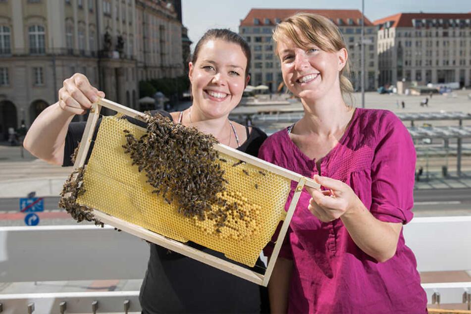 Lisa Becker (30, r.) und Susanne Handrick (29) zeigen  die Waben und Bienen.