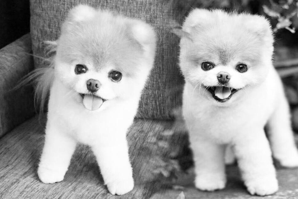 Große Trauer! Der süßeste Hund der Welt ist tot