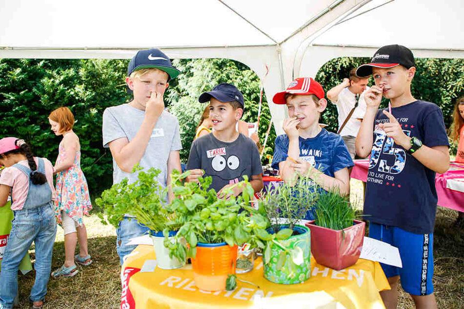 Riechen, fühlen, schmecken: Die Drittklässler Emil (10, v.l.), Tarik, Tino und Fabian (alle 9) lernten im Botanischen Garten auch Kräuter-Kunde.