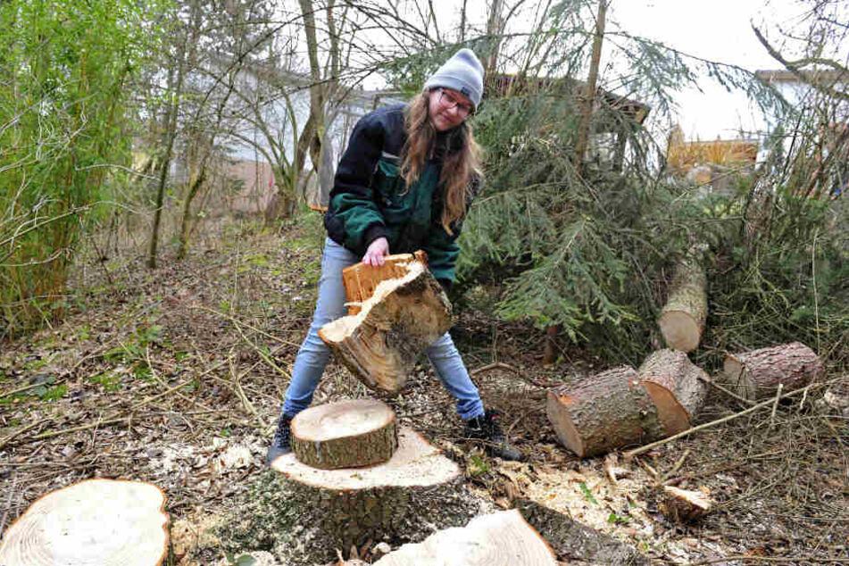 Mitarbeiterin Magdalena Thum (18) räumt im Zoo der Minis die Überreste des Sturms weg.